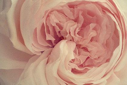 Fleur de soie - Création Séverina Lartigue - Fondation EY